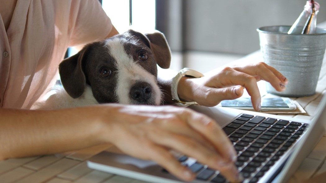 An image of a person typing on a laptop. There is a puppy resting its head on the laptop keyboard.